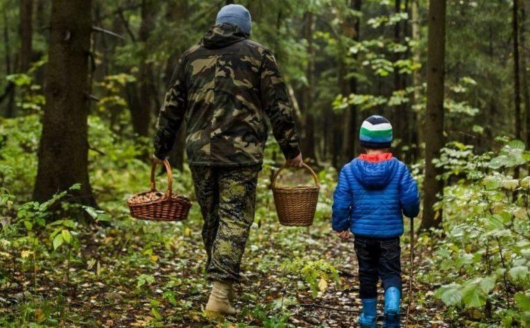 Кто чаще всего теряется в лесу