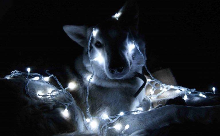В светлый путь: когда в Клин-9 зажгутся фонари