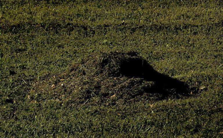 Незарегистрированную могилу с младенцем нашли в Подмосковье