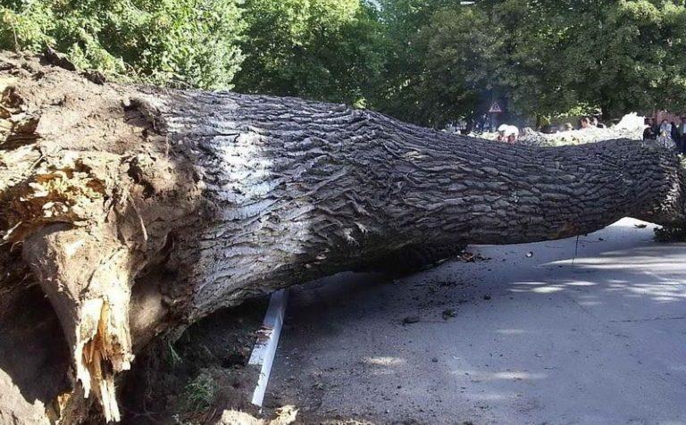 Дерево упало на остановку в г.о. Солнечногорск
