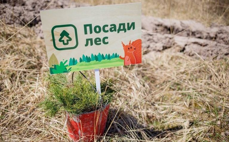 Своё дерево жители Подмосковья смогут посадить с 7 по 30 сентября