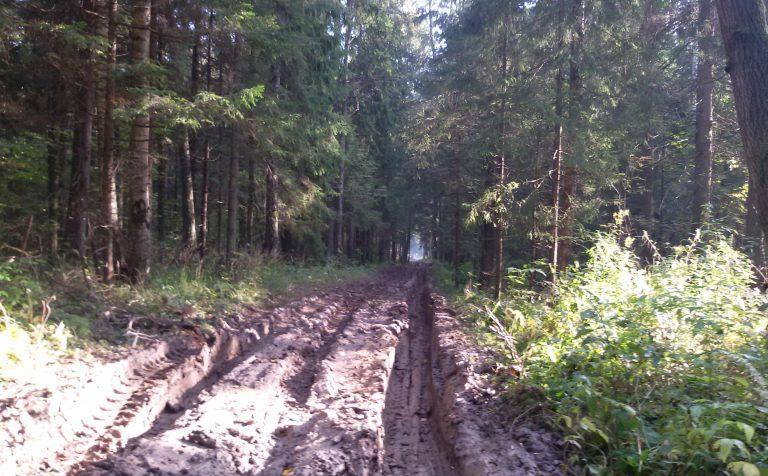 Леса в Подмосковье стали полностью заповедными