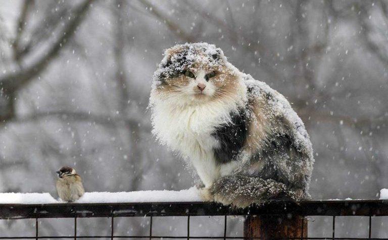 Мокрый снег ожидается сегодня в Клину Московской области