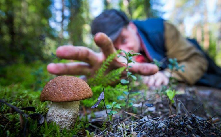 Какие грибы можно найти в подмосковных лесах в октябре