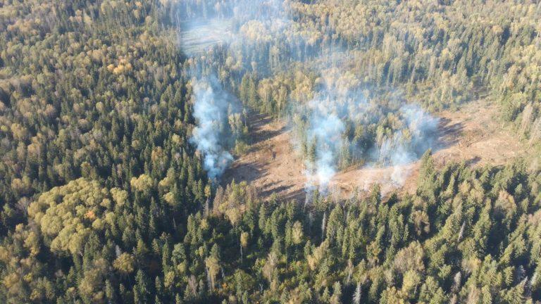Разведка лесом: журналисты «КН» узнали, кто устроил вырубку деревьев в Клин-9