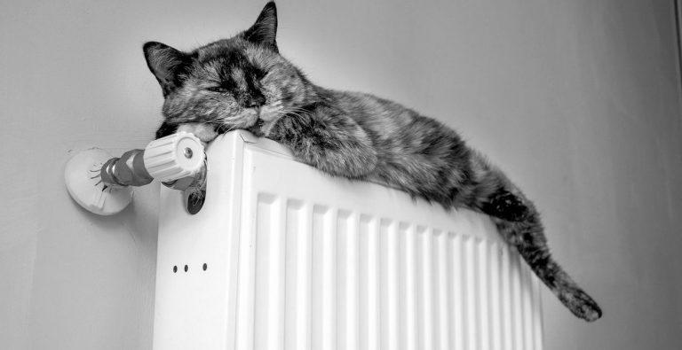 Тепло ли тебе, девица: как подготовить себя к наступающим холодам