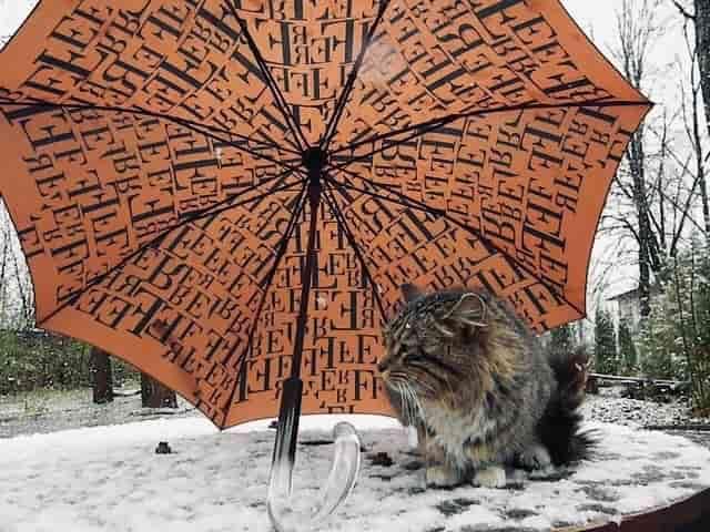 В выходные нас ждут морозы и снегопады