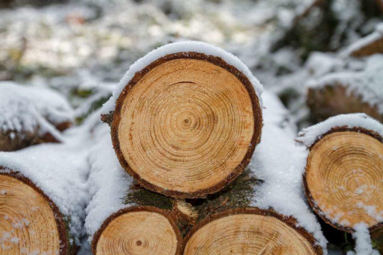 Задержан пенсионер по подозрению в незаконной вырубке дерева
